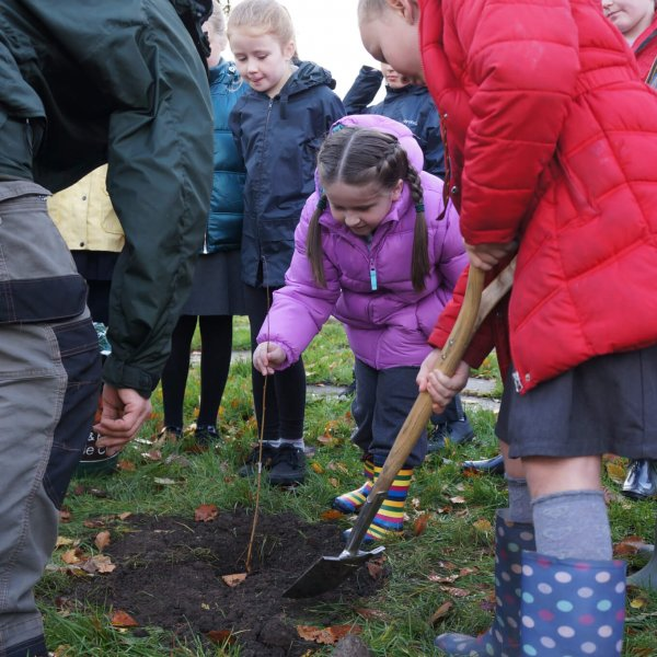 Planting trees at Cwmnedd School.